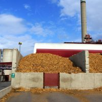 Biomass and Artificial Intelligence: An Unlikely Partnership